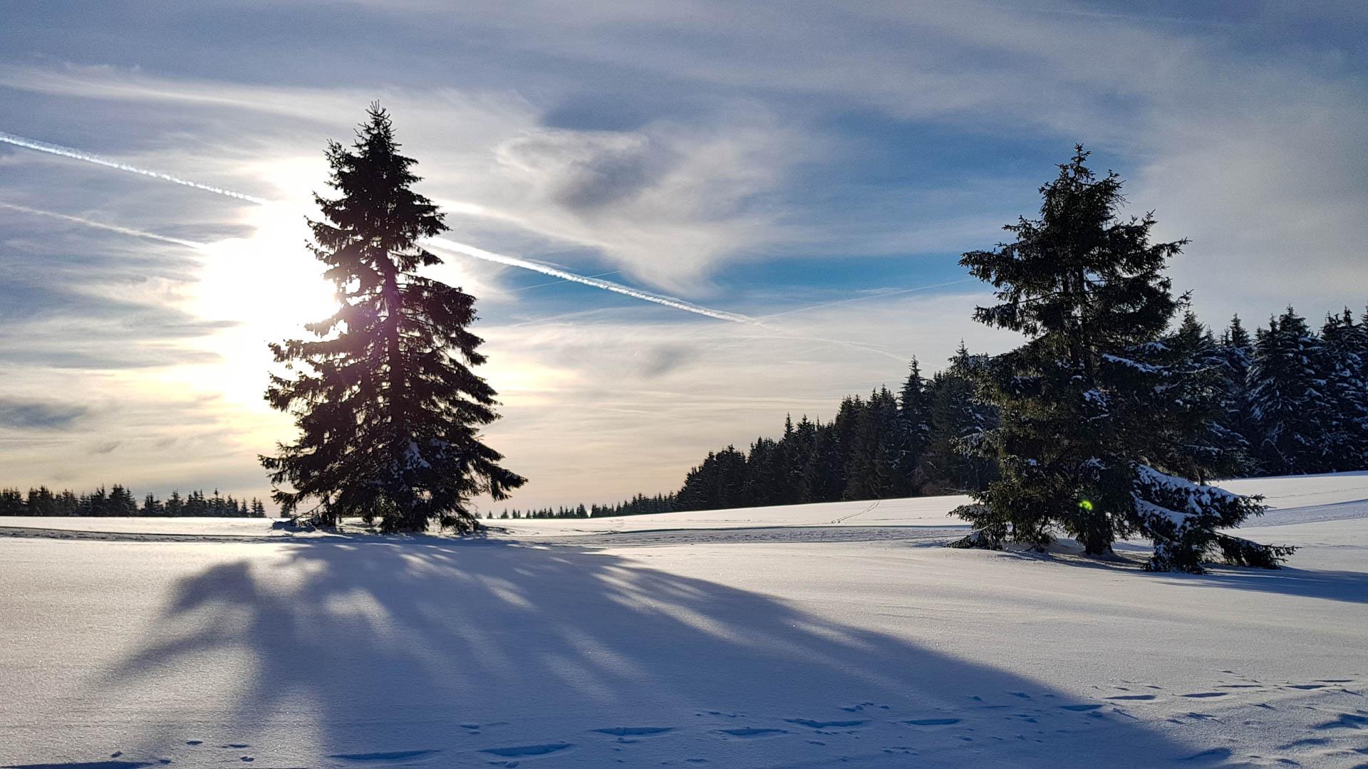 Feuerberg im Winter 2019